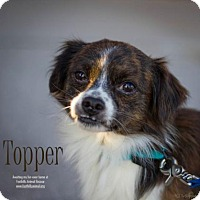Adopt A Pet :: Topper - Scottsdale, AZ