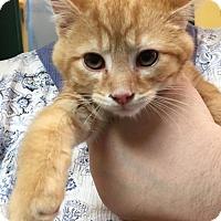 Adopt A Pet :: Peppermint - Lovingston, VA