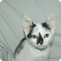 Adopt A Pet :: Marcel - Bradenton, FL