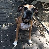 Adopt A Pet :: Hickory - Austin, TX