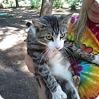 Adopt A Pet :: Koby - Monroe, GA
