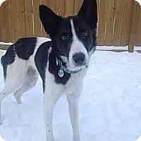 Adopt A Pet :: Patches - Saskatoon, SK