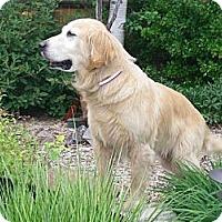Adopt A Pet :: Joanie - Denver, CO