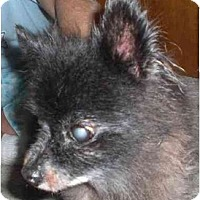 Adopt A Pet :: Maisie - Rigaud, QC