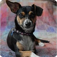Adopt A Pet :: Sydney - Milan, NY