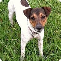 Adopt A Pet :: Haddie - Harrah, OK