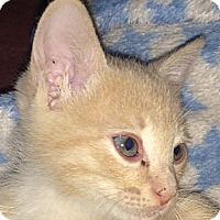 Adopt A Pet :: Butternut - Winchester, CA