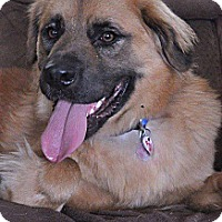 Adopt A Pet :: Fuzzy - La Crosse, WI