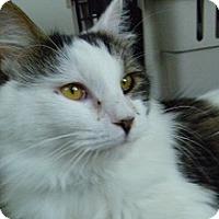 Adopt A Pet :: Aaron - Hamburg, NY