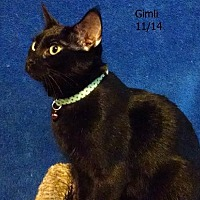 Adopt A Pet :: Gimli - Plain City, OH