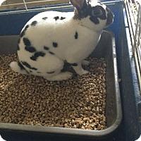 Adopt A Pet :: Nugget - Portland, ME