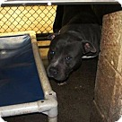Adopt A Pet :: Tasha - Henderson, NC