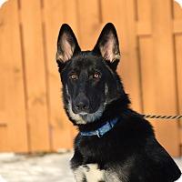 Adopt A Pet :: Tezo - Pleasant Plain, OH
