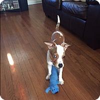 Adopt A Pet :: Petunia - Elyria, OH