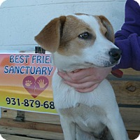 Beagle Mix Puppy for adoption in Jamestown, Tennessee - Lola