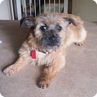 Adopt A Pet :: Buckwheat - conroe, TX