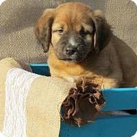 Adopt A Pet :: Dominic - Joliet, IL