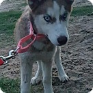 Adopt A Pet :: Kimba