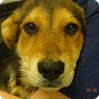 Adopt A Pet :: Abby - Gulfport, MS