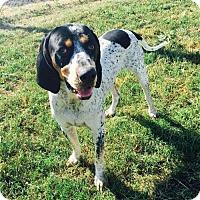 Adopt A Pet :: Cooter - Corning, CA