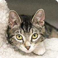 Adopt A Pet :: Mally - New Rochelle Humane, NY