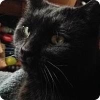 Adopt A Pet :: Samurai - Fort Collins, CO