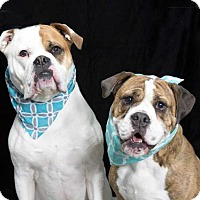 Adopt A Pet :: DAISY and POPPY - Washington, DC