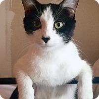 Adopt A Pet :: Madeline - Saint Clair, MO