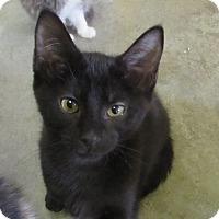 Adopt A Pet :: TRIGGER - Jackson, MO
