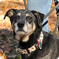 Adopt A Pet :: Jeter - East Hartland, CT