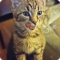 Adopt A Pet :: Ollie - York, PA
