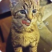 Adopt A Pet :: Ollie - York, PA