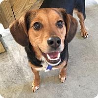 Adopt A Pet :: Jolly - Urbana, OH