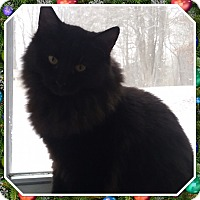 Adopt A Pet :: Sher Khan - Cedar Springs, MI