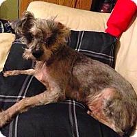 Adopt A Pet :: Rusty - Mission, KS