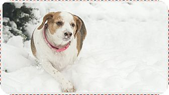 Beagle Mix Dog for adoption in Hainesville, Illinois - Winnie