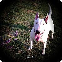 Adopt A Pet :: Leela - Sachse, TX