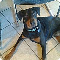 Adopt A Pet :: Sadie - New Richmond, OH
