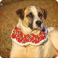 Adopt A Pet :: Brayden - Albany, NY