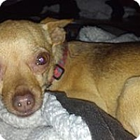 Adopt A Pet :: Sandy - Seattle, WA