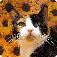Adopt A Pet :: Gina - Albany, NY