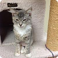 Adopt A Pet :: Lindsey - Lake Charles, LA