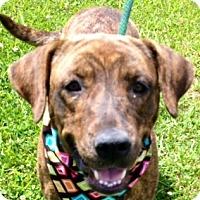 Adopt A Pet :: CAROLINE - Leland, MS