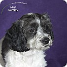 Adopt A Pet :: Sammy
