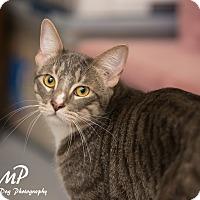 Adopt A Pet :: Alex - Fountain Hills, AZ