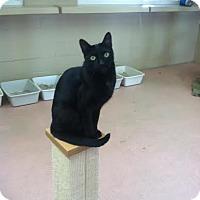 Adopt A Pet :: Sebastian - Spring Valley, CA