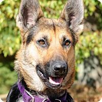 Adopt A Pet :: Sophie - Wayland, MA