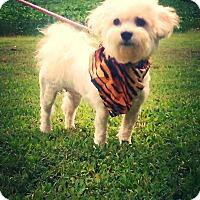 Adopt A Pet :: Gracie - Hollis, ME