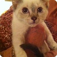 Adopt A Pet :: LA-Rachel - Broomall, PA