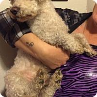 Adopt A Pet :: Gabriel - Studio City, CA